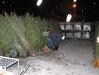 ChristmasTrees_Dec08_12