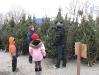 ChristmasTrees_Dec08_15