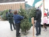 ChristmasTrees_Dec08_16