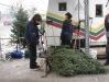 ChristmasTrees_Dec08_18