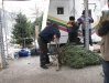 ChristmasTrees_Dec08_19