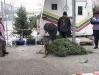 ChristmasTrees_Dec08_23
