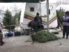 ChristmasTrees_Dec08_24